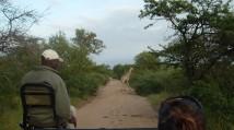 Safari Español